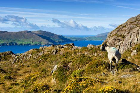 Beara irlande