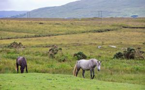 Connemara @ Tourisme Irlandais
